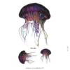 tatouage temporaire méduse