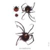 image tatouage araignée 3d