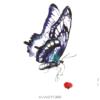image tatouage papillon